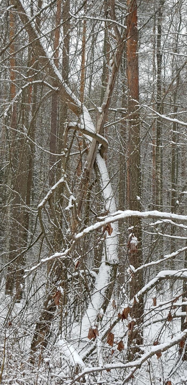Подпёрлась... Дерево, Сошка