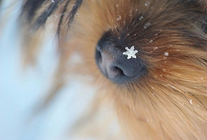 Зима на носу... Зима, Снег, Армавир, Длиннопост