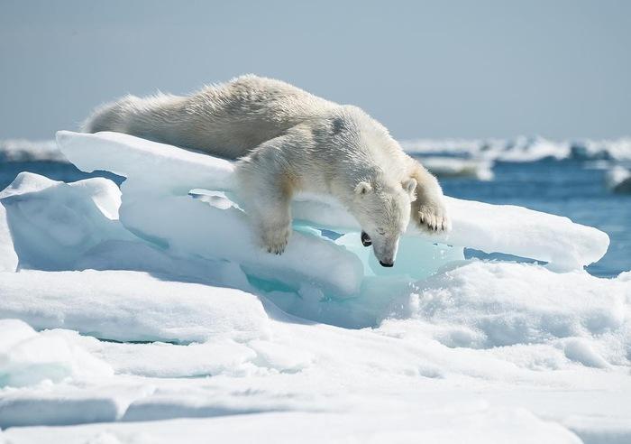 Некоторые очень даже  рады снегу Фотография, Рго, Instagram, Длиннопост, Животные, Лиса, Медведь, Белый медведь, Зубр