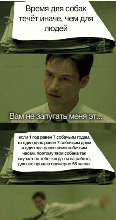 Выглядит как уважительная причина уйти пораньше с работы) Матрица, Мемы, Собака, Время, ВКонтакте, Нео