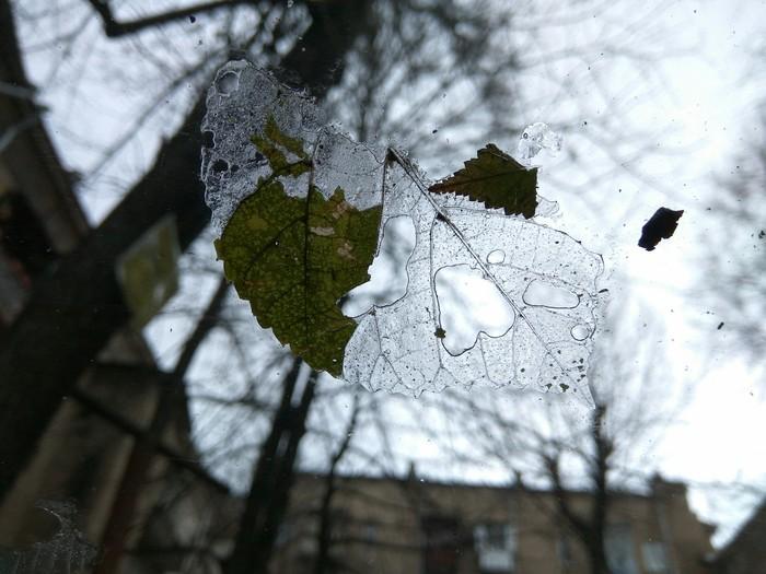Осколки осени Лёд, Осень, Листопад, Фотография