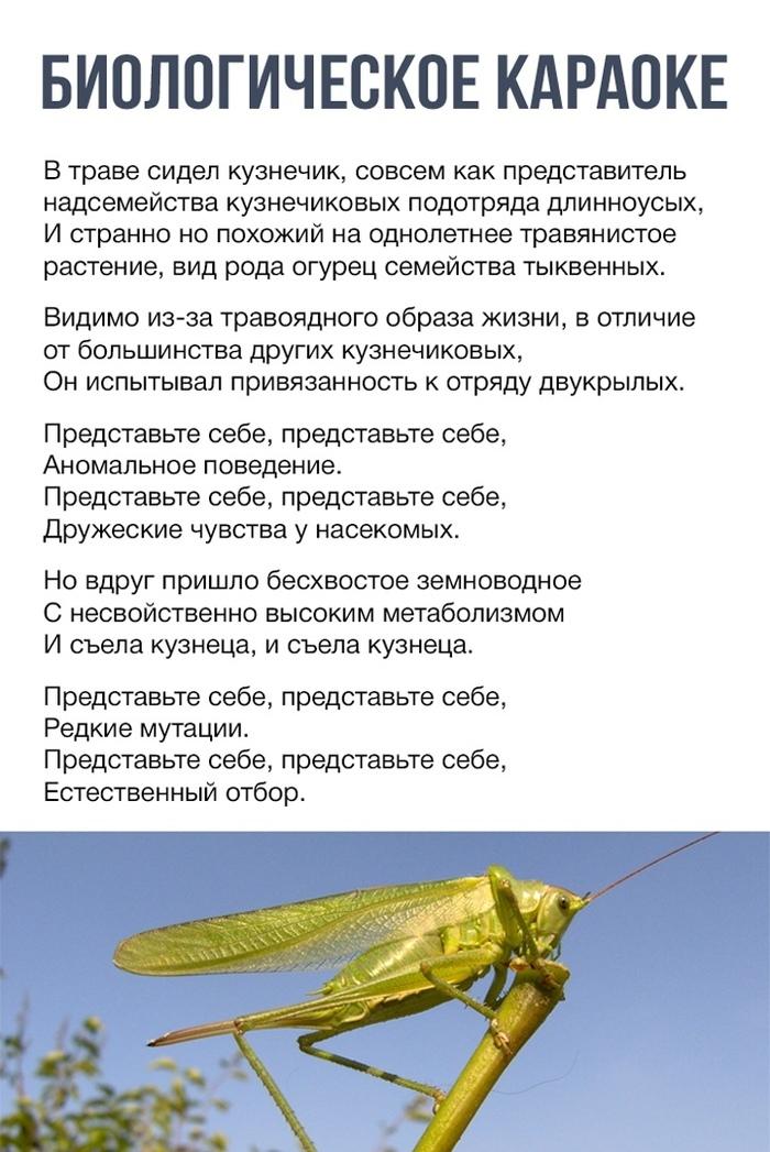 Песенка про кузнечика на научный лад