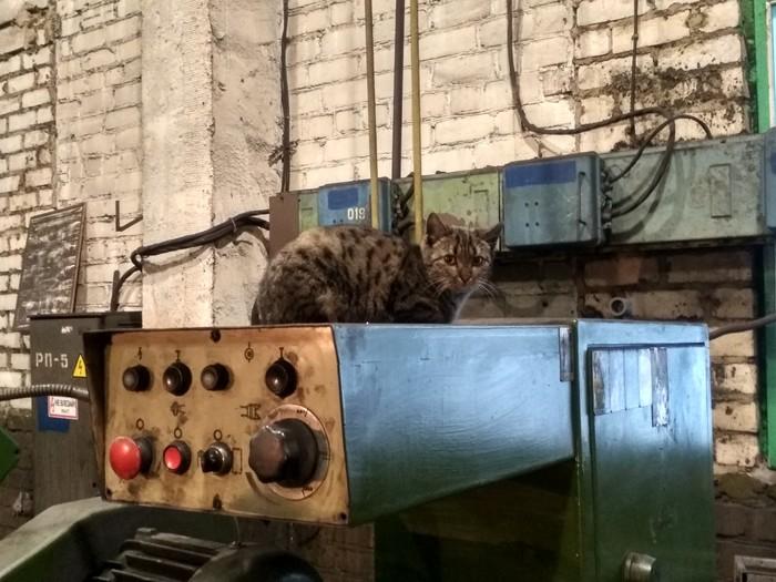 Заводской утренний котик 2 Кот, Котомафия, Станок, Завод, Длиннопост