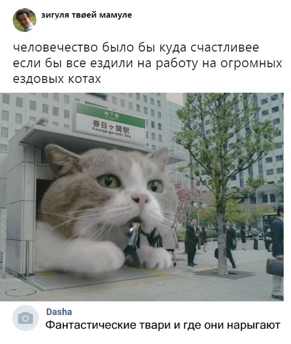 Про ездовых котов.