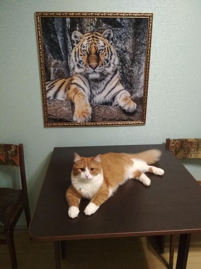 Добавлю котика в ленту Кот, Котомафия, Домашние животные