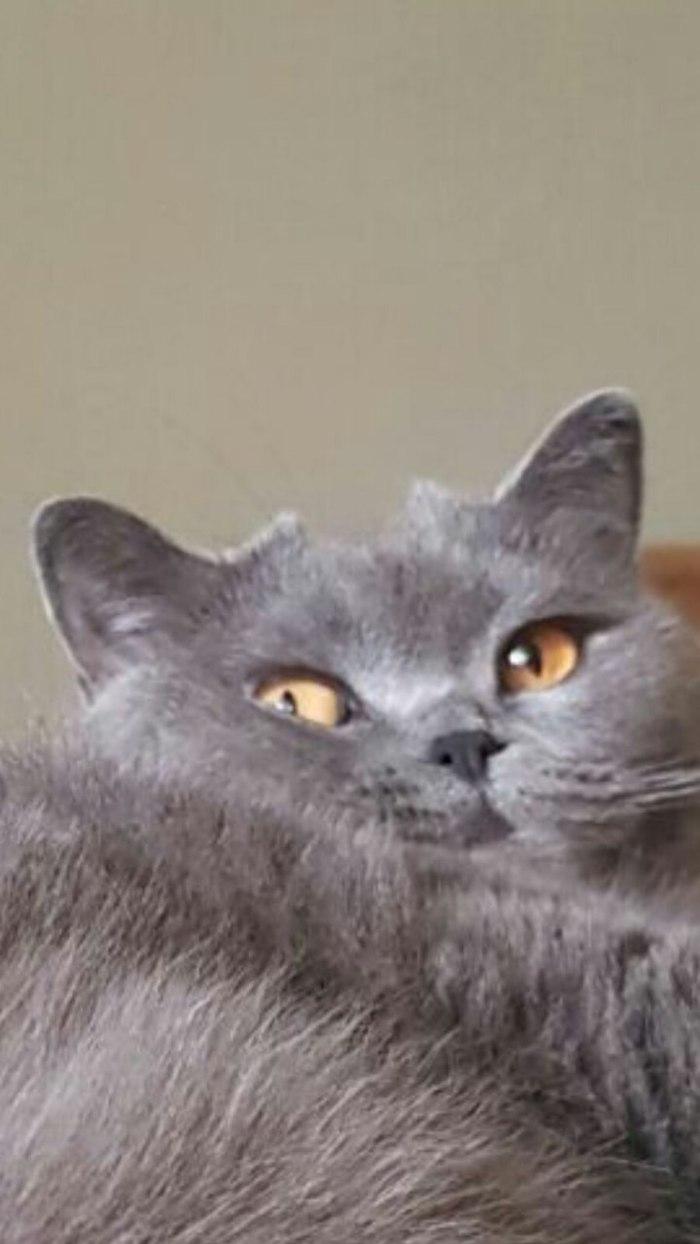Когда все уснут, я буду без причины бегать по квартире, при этом обязательно что-то разобью Кот, Котомафия, Замысел, Длиннопост