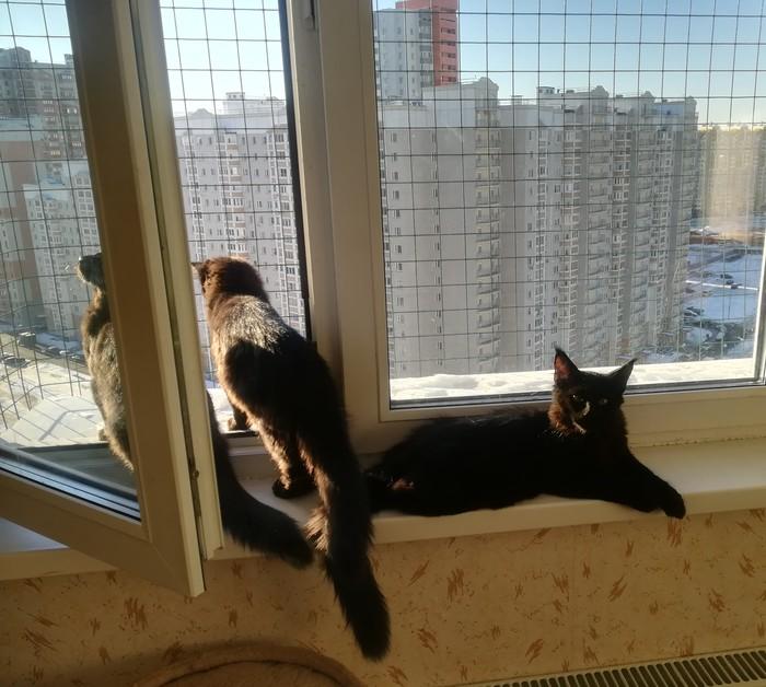 Ко дню домашних животных Домашние животные, Кот, Котомафия, Длиннопост
