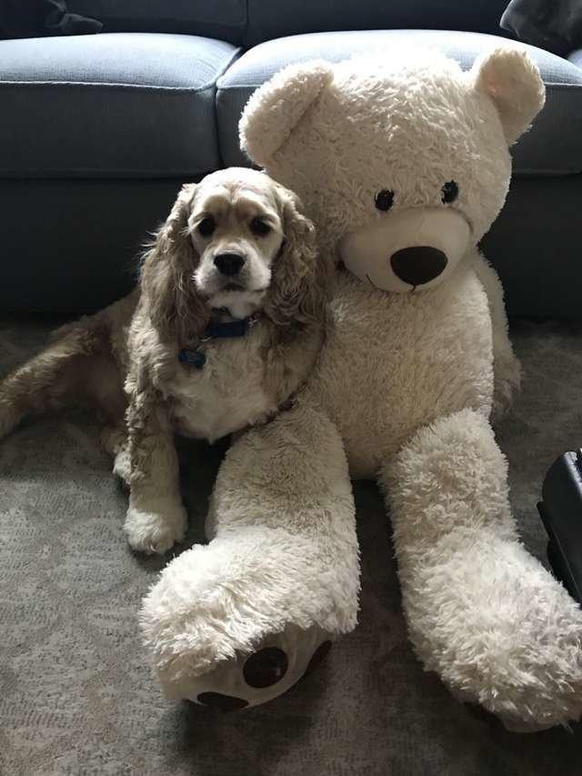 Моральная поддержка: пес просидел у барабана весь цикл, пока стирался его друг Дружба, Собака, Медведь, Стирка, Видео, Длиннопост