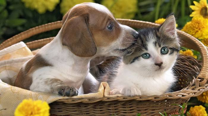 Сегодня отмечается Всемирный день домашних животных! Домашние животные, Правздник, День, Питомец, Братья наши меньшие, День домашних животных