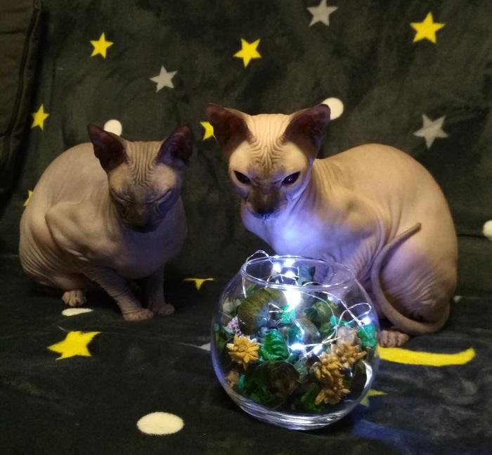 Поздравляем сВсемирным днём домашних животных!