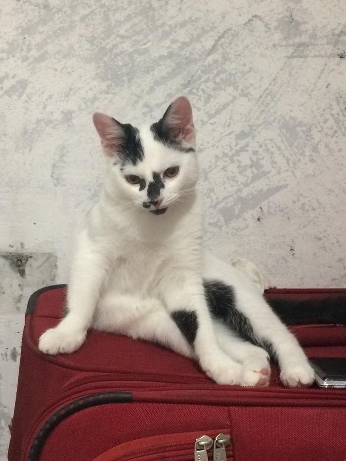 День домашних животных Кот, Котомафия, Домашние животные, Длиннопост