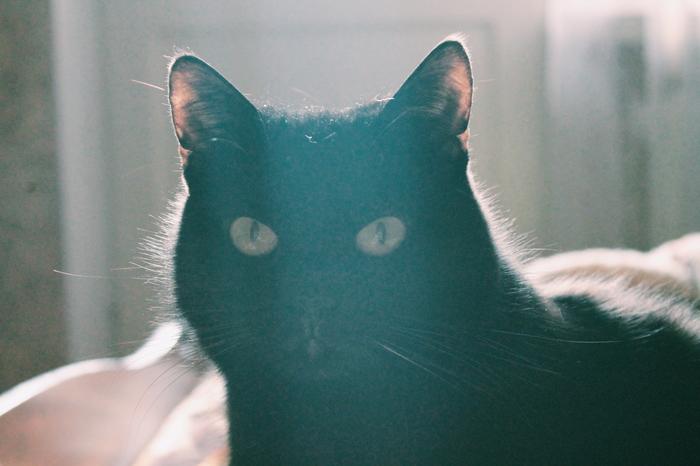 В день домашних питомцев! Кот, День домашних животных