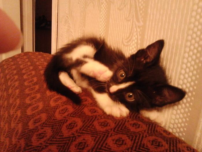Мой котопитомец :3 Котомафия, Питомец, Кот, Спасение животных, День домашних животных, Длиннопост