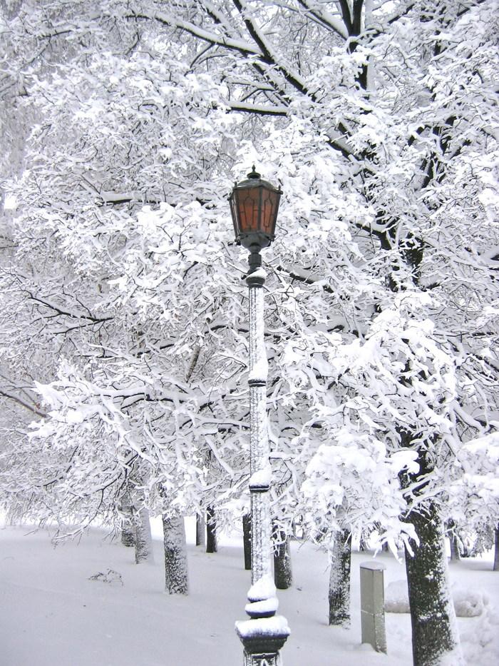 С началом зимы! Зима, Снегопад, Длиннопост