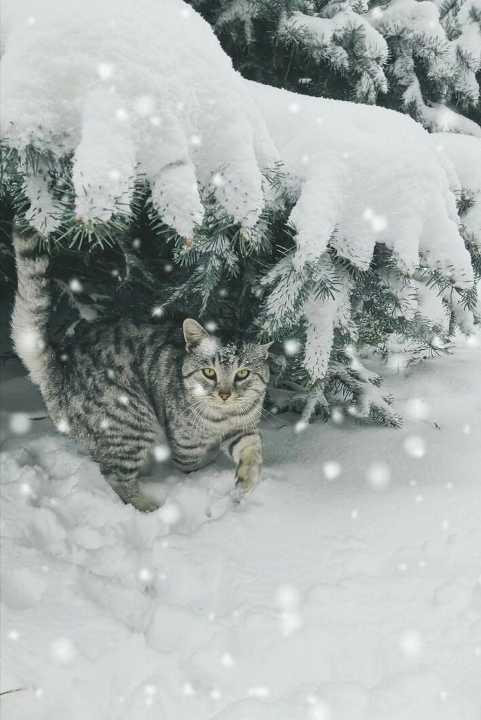 С первым днем зимы... Зима, Кот, Снег, Фотография