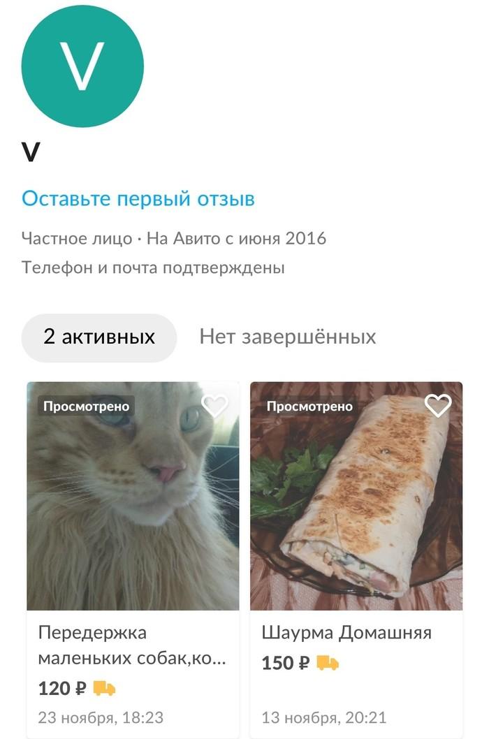 С просторов Авито Шаверма, Собака, Передержка, Кот