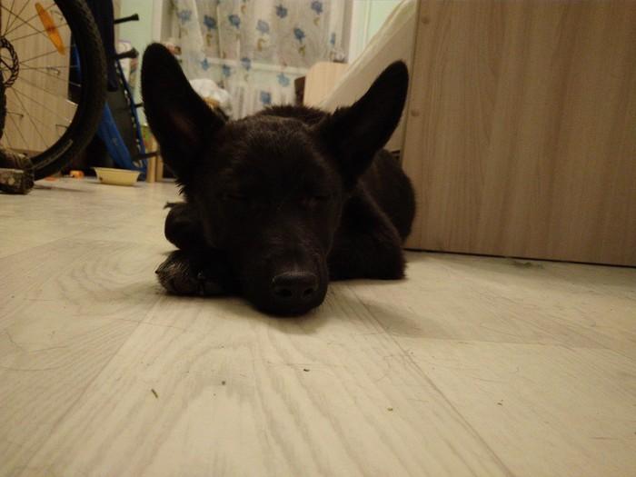 Найден щенок. Иркутск, Ищу хозяина, Щенки, В добрые руки, Собака, Без рейтинга
