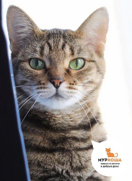 Кошка Мэгги: история надежды Трогательно, Длиннопост, Муркоша, Приют для животных, Приют муркоша, Реальная история из жизни, Кот