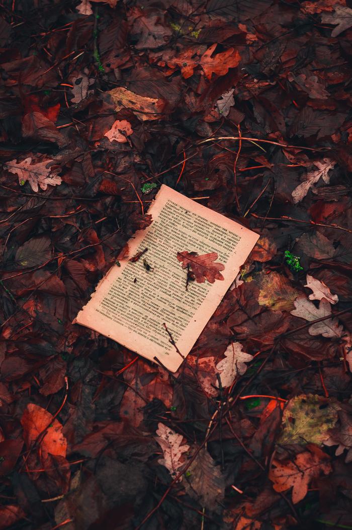 Осенняя поэзия Фотография, Природа, Листья, Книги