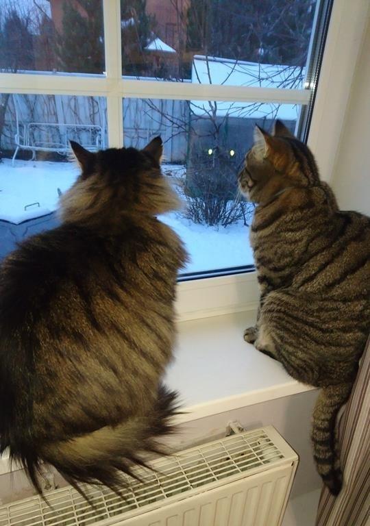 Что там по окну передают?