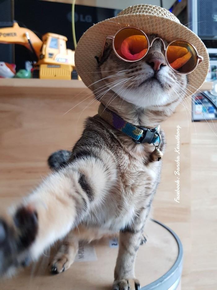 Шерстяные модники Кот, Длиннопост, Модные коты, Котомафия, Одежда, Стиль, Фотография