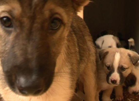 Всем щенкам, найденным в лесу под Рязанью, нашли хозяев. Помощь животным, Длиннопост, Доброта, Рязань, Щенки, Собака, Спасение животных