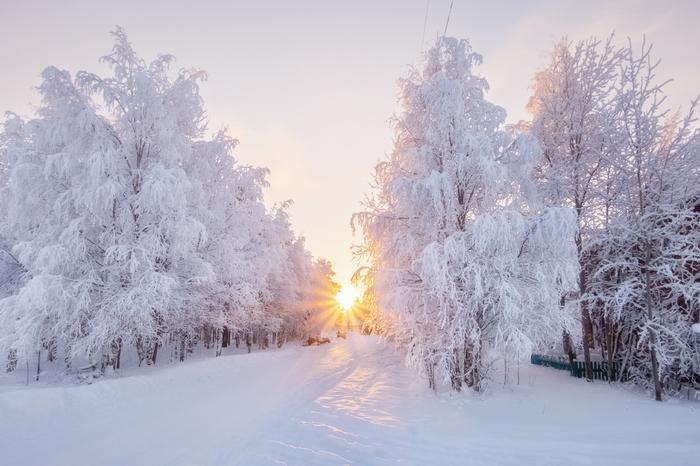 Зимнее утро Фотография, Зима, Красота природы, Коми, Россия, Природа