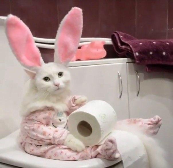 Зайце-кот