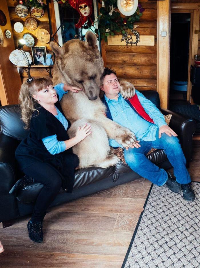 В русской семье вот уже 20 лет живет медведь Степан Медведь, Россия, Новости, Шок, Семья, Длиннопост