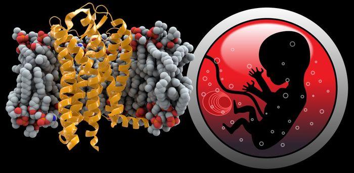 В Китае родились близнецы с отредактированным геномом, которые, по задумке экспериментатора, защищены от ВИЧ Редактирование генома, CRISPRCas, CCR5, ВИЧ, Длиннопост