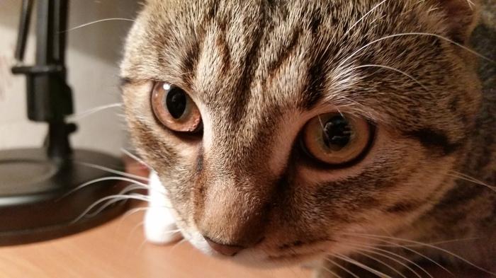 Мой котэ Вислоухий, Котомафия, Кот, Длиннопост