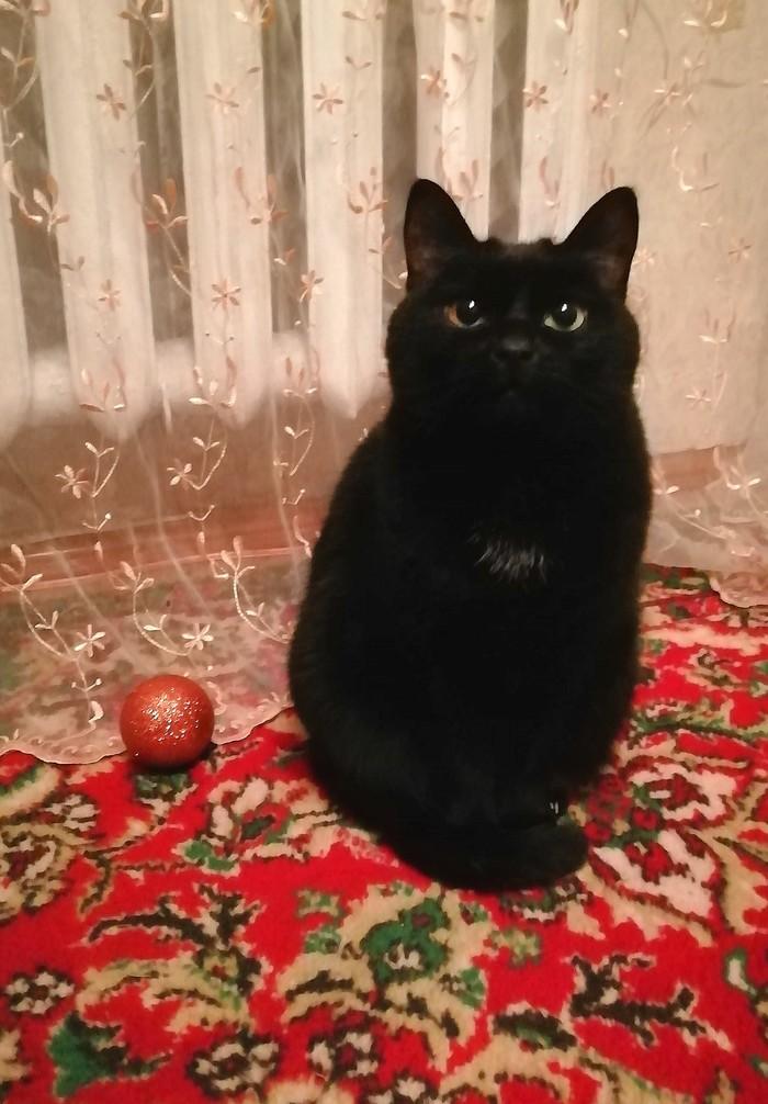 Кошка и шар