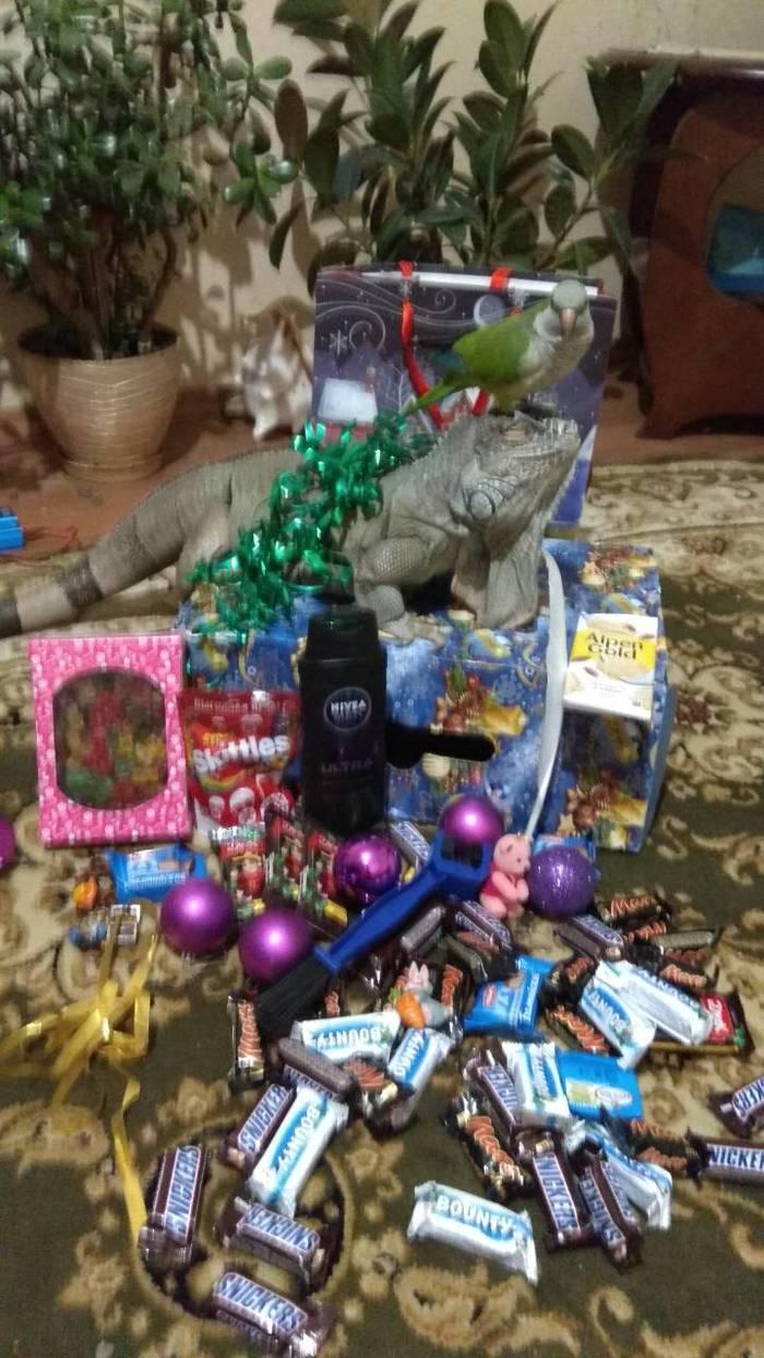 Все люди как люди : а у нас Новый Год! Подарок, Новый Год, Тайный Санта, Белое перо, Сургут, Радость, Игуана, Конфеты, Длиннопост