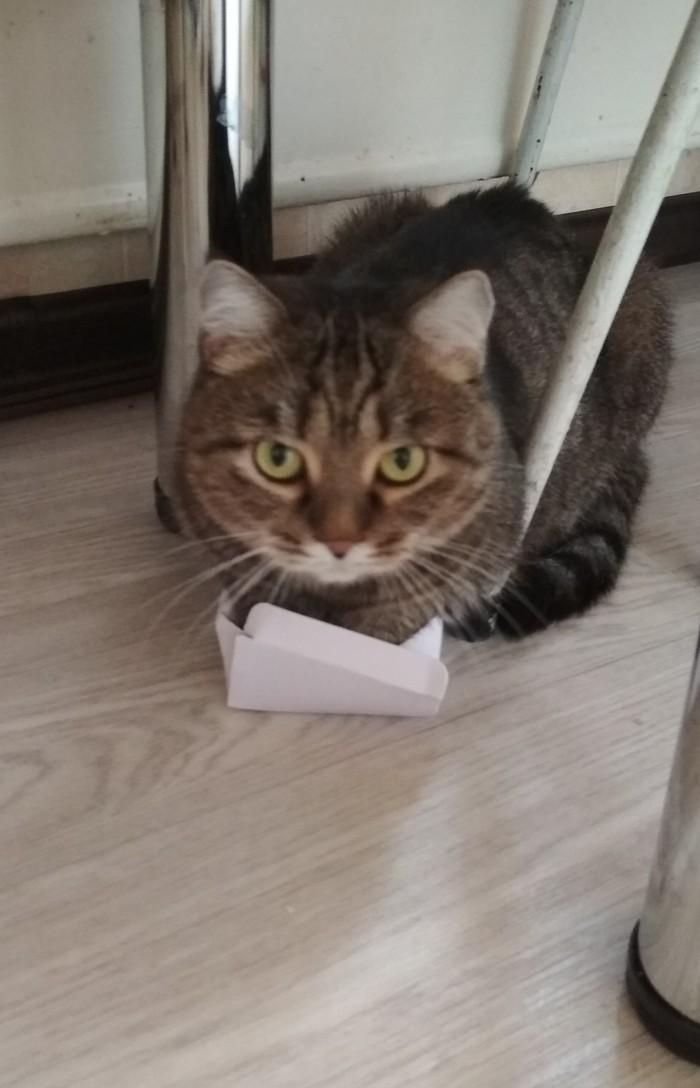 Размер не важен)) Кошка Масяня, Коробка и кот
