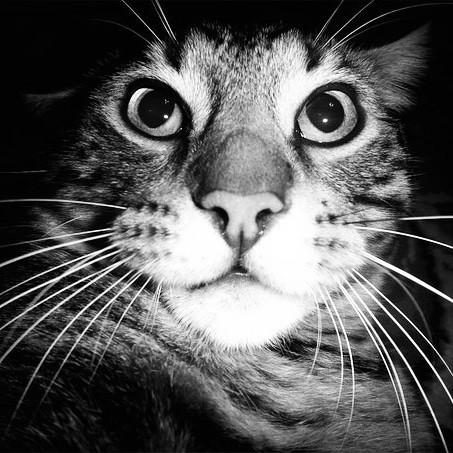 Лучший из котов Кот, Лучший друг, Негатив, Печаль