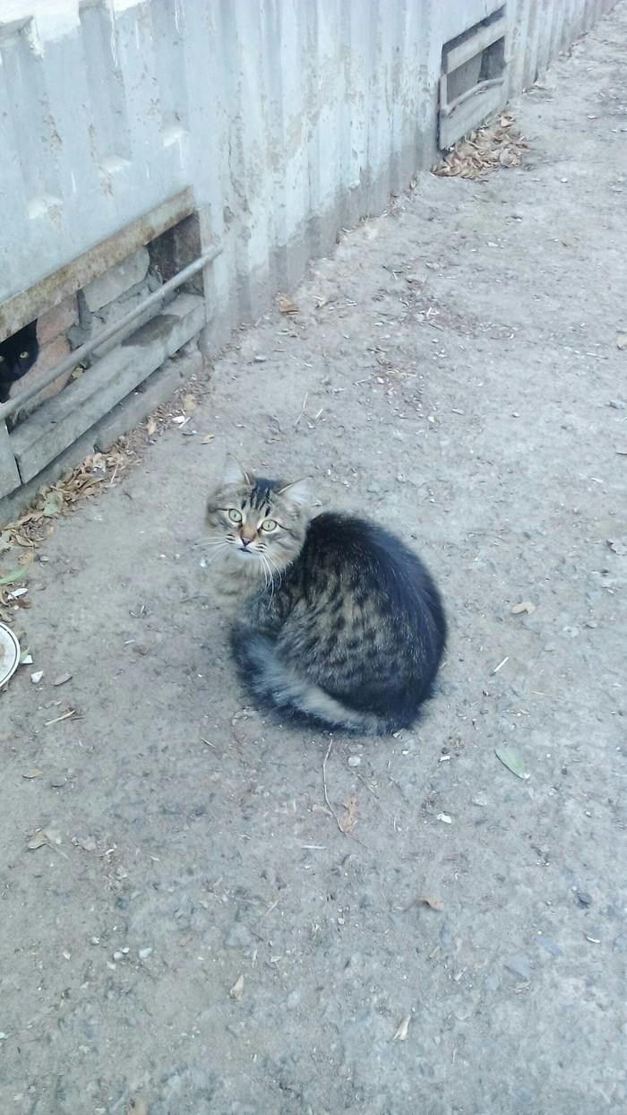 Котей Котомафия, Кот, Длиннопост