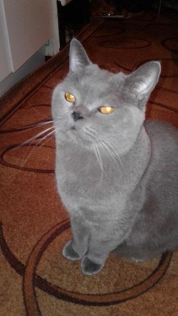 Кот Кот, История, Мат