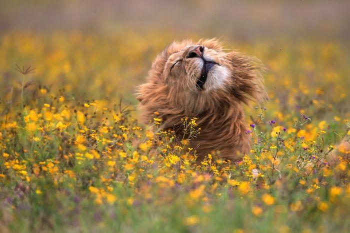 Какой я красавец Лев, Фотограф, Милота