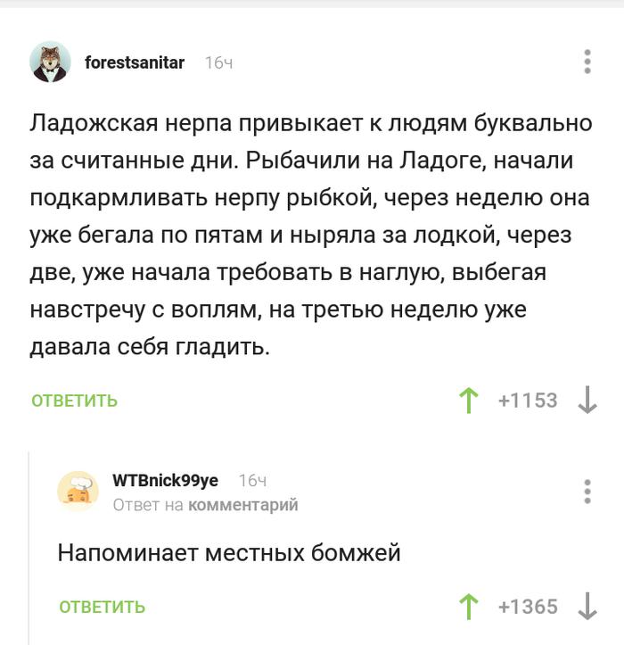 Фауна Ладоги Комментарии на Пикабу, Скриншот, Ладога, Нерпа