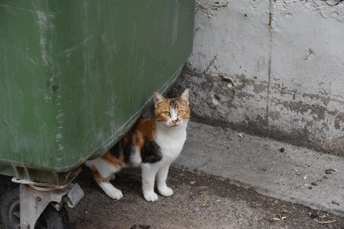 Кипрокошки Кот, Котомафия, Кипр, Фотоохота, Длиннопост