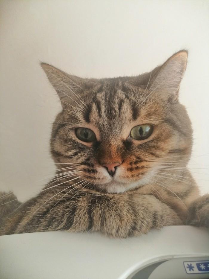 Кошка которая живёт на холодильнике. Котомафия, Длиннопост, Наглые котики, Кот