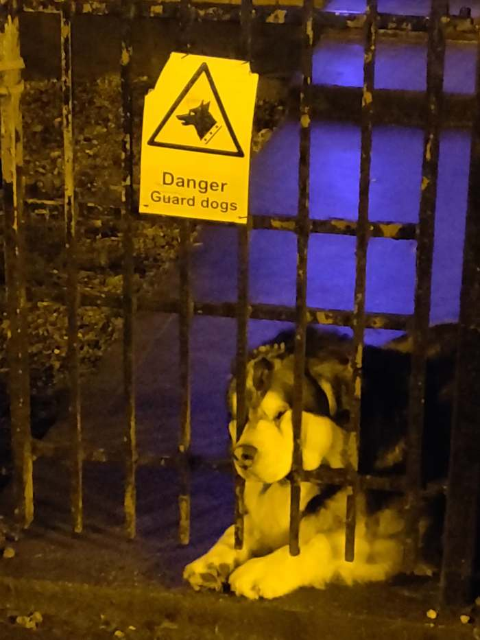 Осторожно! Сторожевая собака