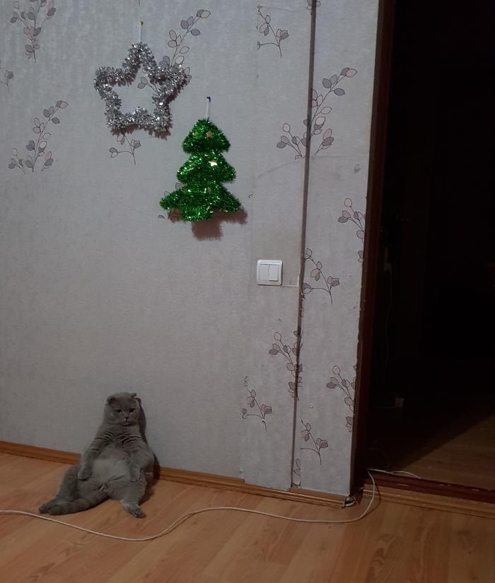 Когда узнал что настоящей елки не будет...