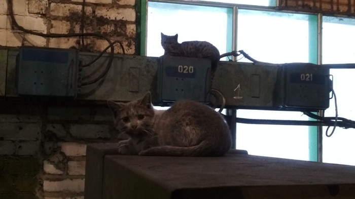Много много заводских котиков трудяг работяг Кот, Котомафия, Котята, Завод, Длиннопост
