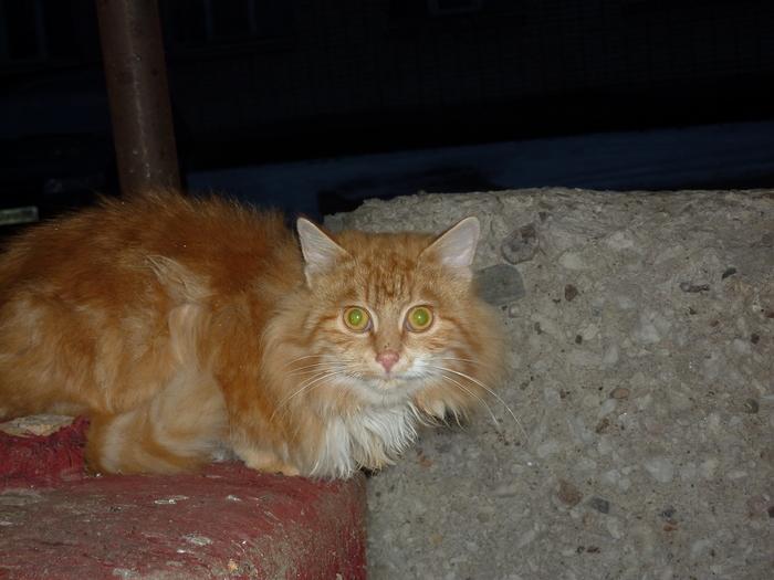Новая находка-новая забота Кот, Бездомные животные, Будет искать дом, Шухер, Длиннопост, Без рейтинга