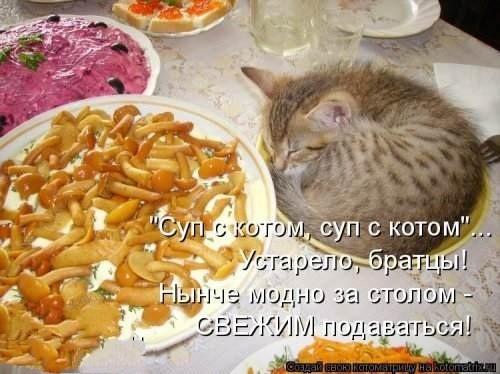 Теперь, не только в коробках. Тарелка, Люди и кошки, Юмор, Кот, Котоматрицы