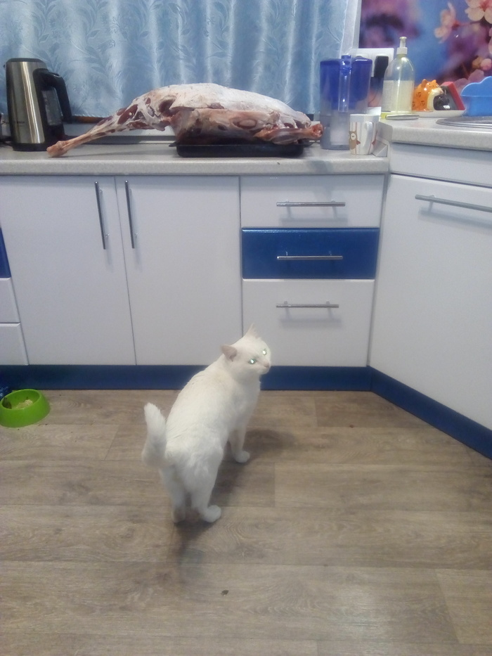 Котики... отжимают кусочек мяса. Кот, Мясо, Милота, Длиннопост