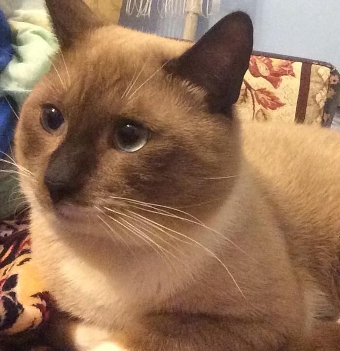 Котик ищет дом Кот, В добрые руки, Санкт-Петербург