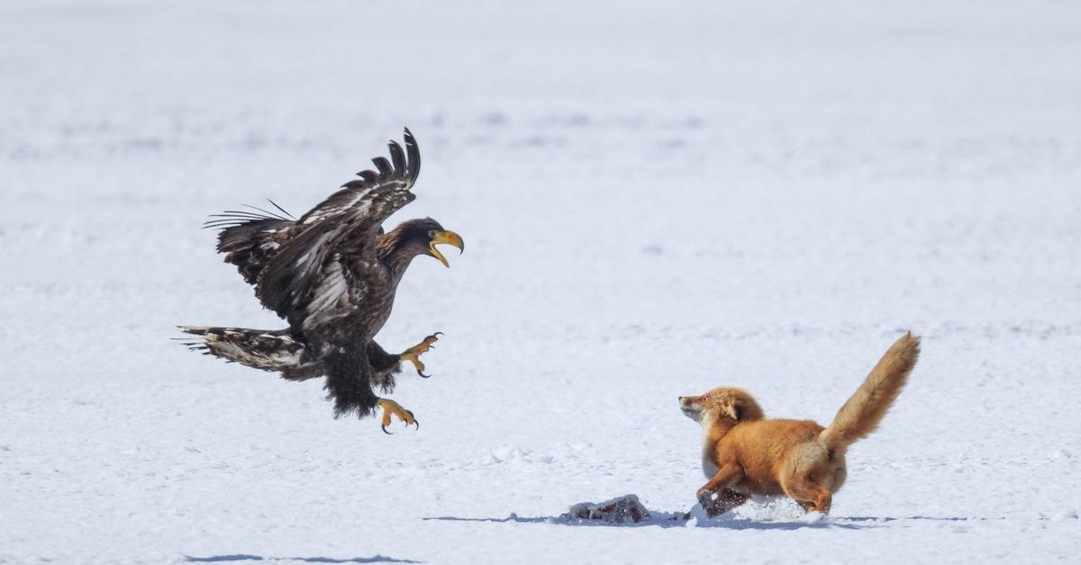 картинки орел и лиса бакинском государственном