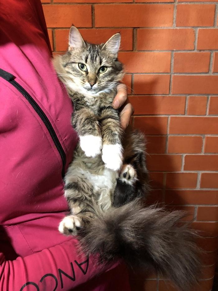 Делюсь радостью (уехали домой) Котята, Кошкиспас, Кошки люди, Длиннопост, Кот